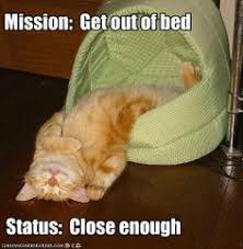 Funny quotes on Pinterest   Cat, Simons Cat and Animal Humor via Relatably.com