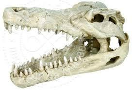 <b>Грот для аквариумов Trixie</b> Череп крокодила 14см - купить ...