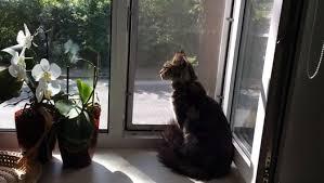 Защитная сетка Banzai для котов
