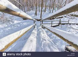Wooden <b>bridge</b> covered by <b>snow</b> in a <b>forest</b> of eastern Belgium ...
