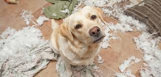Image result for dogs images