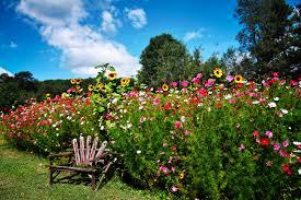 Small Picture Garden Design Garden Design with wild flower garden design ideas