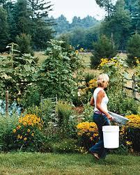 Small Picture Planning a Garden Martha Stewart