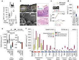 Stereomicroscopic <b>3D</b>-<b>pattern</b> profiling of murine and human ...