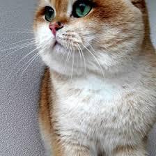 Лариса Киянец (goldcattery) на Pinterest