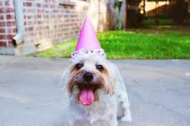 """<b>Chinese</b> Birthdays 101: """"Happy Birthday"""" in Mandarin and More"""