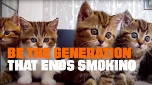 Can <b>Smoking</b> Kill <b>Cat</b> Videos? A Bold Public Health Ad Says Yes ...