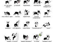 Dog: лучшие изображения (144) в 2020 г. | Дрессировка собак ...