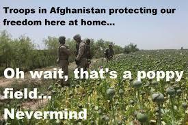 """Résultat de recherche d'images pour """"opium field afghanistan"""""""