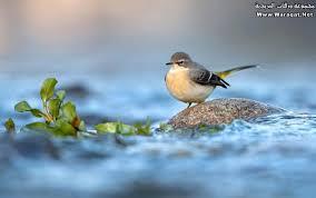 صور حيوانات اليفة images?q=tbn:ANd9GcQ