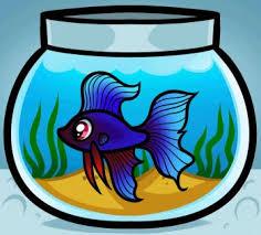 drawing aquarium