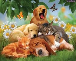 Znalezione obrazy dla zapytania psy i koty