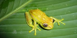 The world's first <b>glow-in</b>-the-dark frog found in Argentina