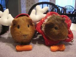 Image result for cats looking annoyed wearing christmas outfits