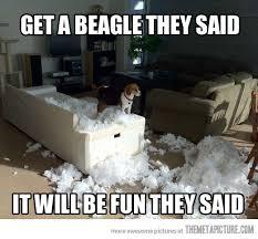 BEAGLES Quotes Like Success via Relatably.com