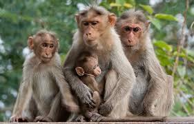 monkey க்கான பட முடிவு