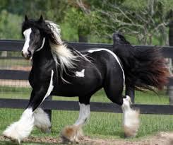 صور اجمل احصنة في العالم images?q=tbn:ANd9GcQ