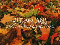 Невероятных изображений на доске «Seasons: autumn»: 101 в ...