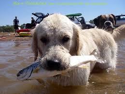 Можно ли собакам рыбу