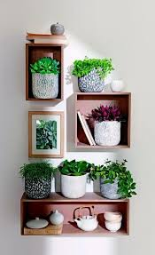 shui plants living ideas