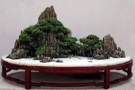 5 replies 53 retweets 54 likes bonsai tree
