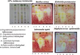 .62 Screening of selected aromatic plants belonging to Labiateae ...