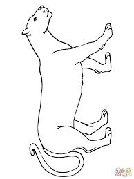 Small Picture Cougar coloring pages Free Coloring Pages