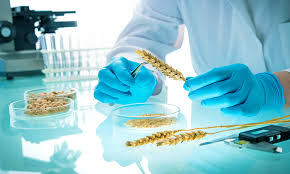 Organic certification <b>body</b> urges <b>caution</b> over gene editing consultation