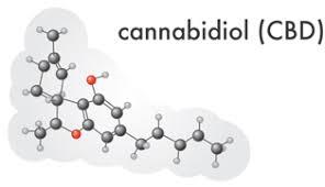Marijuana High In Cbd