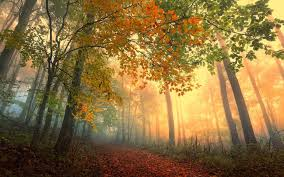 Image result for image fall light