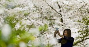 Image result for selfie di pohon