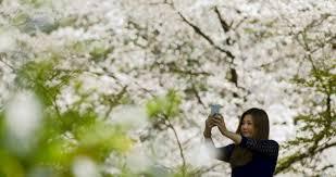 Image result for selfie di pohon