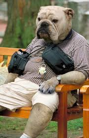 ألبوم صور حياوانات مضحكة images?q=tbn:ANd9GcQ