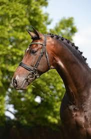 home hengsthaltung kathmann our stallions