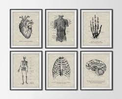 vintage anatomy set of 6 art prints antique human figures scientific anatomical book art art force office decoration