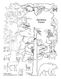 Small Picture Coloring Pages Of Animals In The Forest Coloring Pages