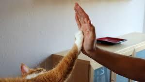 Are <b>cat</b> claw caps cruel, <b>safe</b>, or just ridiculous? | Policygenius
