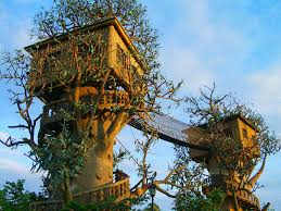ideas about Tree House Masters on Pinterest   Tree Houses       ideas about Tree House Masters on Pinterest   Tree Houses  Treehouses and Masters