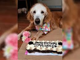20-Year-Old Augie is World's Oldest <b>Golden Retriever</b> | Engoo ...
