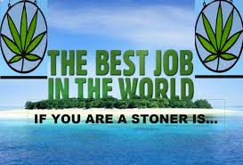 the best job for a stoner is