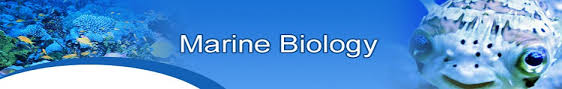 click here for the top rated best selling health and personal care products marine biologist job description and salary