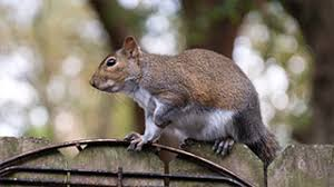 How to Keep <b>Squirrels</b> Out of the Yard and Garden | Tomcat