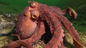 <b>Octopus</b> Steals Crab from Fisherman | Super Smart Animals | BBC ...