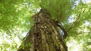 Beech <b>forest</b>: Native plants