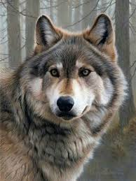 Diy 5D <b>Diamond Painting</b> Wolf <b>Picture</b> Full Round Diamond ...