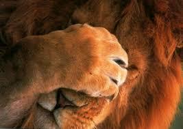 Resultado de imagem para leão