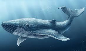 """Результат пошуку зображень за запитом """"картинка синій кит"""""""