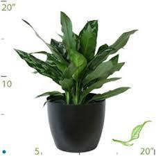 low light best low light office plants