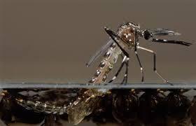EEE virus found in mosquitos in Voluntown | FOX 61