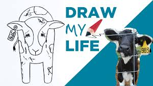 <b>Draw My Life</b>: A Cow in Today's Dairy Industry